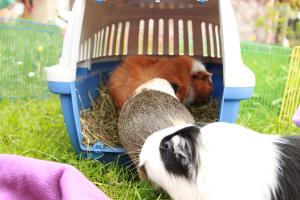 Die Schweine essen Auswärts!