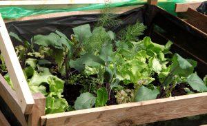 Urban gardening für Anfänger